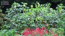 Кризата удари градината на Мишел Обама - катерички изядоха чери доматите й