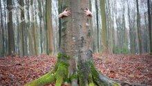 Дърветата излъчват положителна енергия