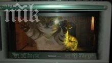 Жена сготви котката си в микровълновата - посегнала на любимата й златна рибка (снимки 18+)