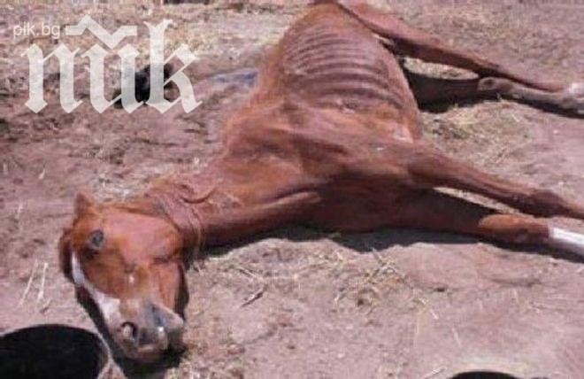 Застреляха кон в Тетевен