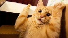 Не галете котките, стресирате ги!