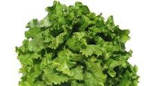 Нитратите в салатите – 20 пъти над нормата!