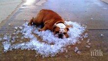 """Само в ПИК и """"Ретро""""! Адски пек през юли в България! 42 градуса на сянка заради течението """"Ел Ниньо"""". Вижте коментарите на учени и синоптици!"""