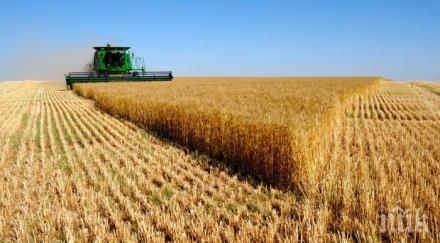 нямало опасност унищожаване зърнената реколта заради наводненията