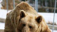 Местят две мечки от пловдивския зоопарк