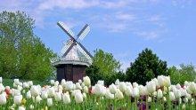 Холандия –  страната на сирената и лалетата