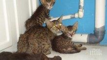 200 лева глоба за хранене на улични котки в Пловдив