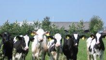 ЕС смята да обжалва руските забрани за внос на месо от България