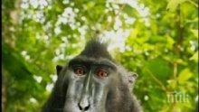 Маймуна си направи селфи </p><p>