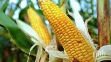 Жена открадна 140 кг царевица в Козлодуй