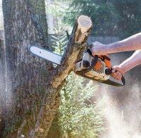 Засякоха пет конски каруци с незаконни дърва при мащабна акция