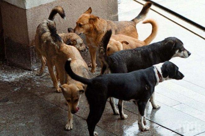Човешките кости, разнасяни от улични кучета в Перник, все още не са идентифицирани