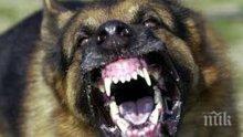 Бездомни кучета нахапаха две деца в Кърджали
