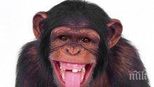 Маймуна свали дрон с пръчка в холандски зоопарк