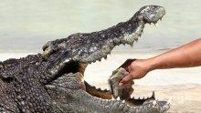 Крокодил нападна голфър в Австралия