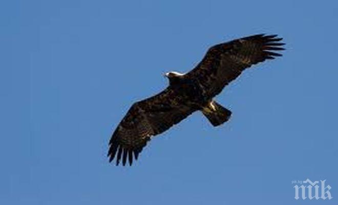 Гарван нападна орела на Лацио (снимка)