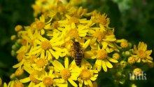 Настъпва главната паша за пчелите