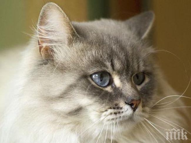 """В курорта """"Албена"""" ще се състои """"XV и XVI Международна лицензирана изложба на котки"""""""