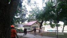 """Дърво се разцепи на две в парка в """"Аспарухово"""" във Варна"""