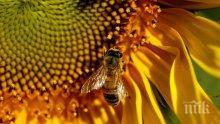 Пчелата майка търси празни пити