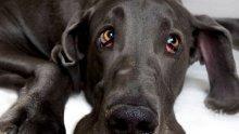 Перник в потрес! Брутално зверство: Мъж върза куче за мерцедеса си, влачи го с 50 км/ч