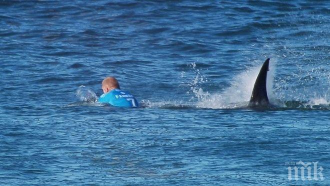 Акула уби сърфист в Австралия