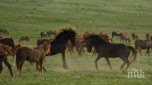 Потресаващо! Мълния уби 26 коня в Рила