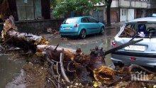 Огромно дърво размаза колата на млада жена в Пловдив