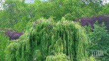 """""""Дърветата на щастието"""" - хит в китайската градина"""