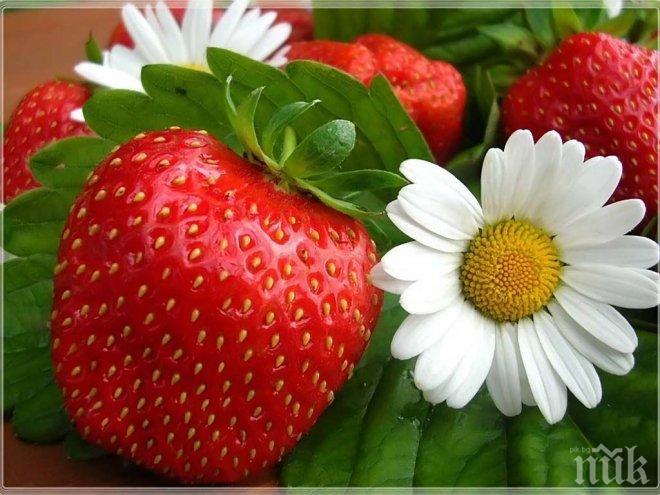 Изкоренете лъжливите ягоди
