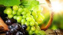 Семките на гроздето подмладяват