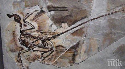 компютърна томография дава възможност учените изследват вътрешността крехки вкаменелости