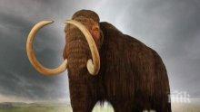 Скелет на прародител на мамута отпреди 100 000 години е намерени в Сибир