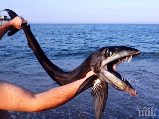 """Палеонтолози откриха древна """"сухоземна"""" риба"""