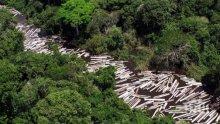 4 години затвор за горски бракониер</p><p>