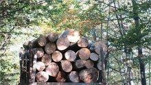 Бракониер с 40 акта удрял горски стражар, заплашвал семейството му