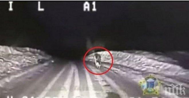 По време на дежурство, куче изкача пред полицейски патрул. Полицаите решават да го проследят, защото...