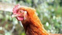 Япония е забранила вноса на птиче месо от Франция заради случаи на птичи грип
