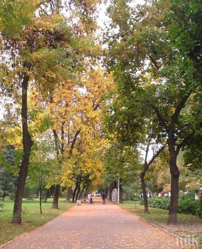 Лекувайте страховата невроза с разходки