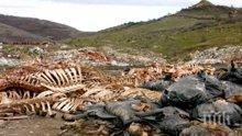 Ужас и смрад в Кърджалийско: Тонове кокали и трупове на животни са стоварени край път между две села (снимка)