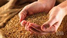 Пазете семената на сухо и проветриво място