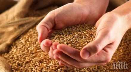 пазете семената сухо проветриво