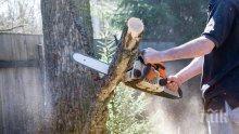 Хванаха каруци с незаконни дърва в Хасково