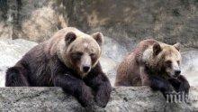 Февруарските жеги събудиха от зимен сън мечките в Белица