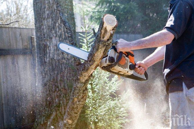 Повече от 3200 акта съставиха горските инспектори от началото на годината