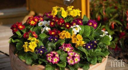 запазим дълго време свежи пролетните цветя