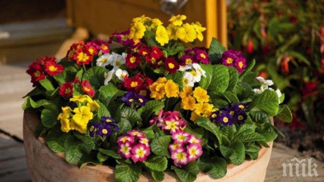 Как да запазим по-дълго време свежи пролетните цветя