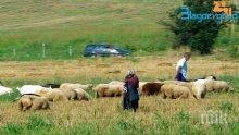 Петричките животновъди ще блокират Е-79 заради изгубени субсидии