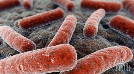 Разработиха бактерия, която се храни с въглероден диоксид и произвежда гориво