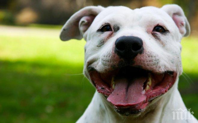 Възмездие! Три години затвор за рецидивиста, чието куче нахапа баба по лицето